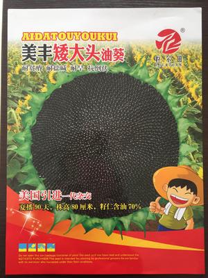 油葵种子大弯头籽仁含油率70%左右油质好 粒尔田美丰矮大头油葵种子