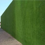 新疆草皮围墙 绿化用草坪围挡图片