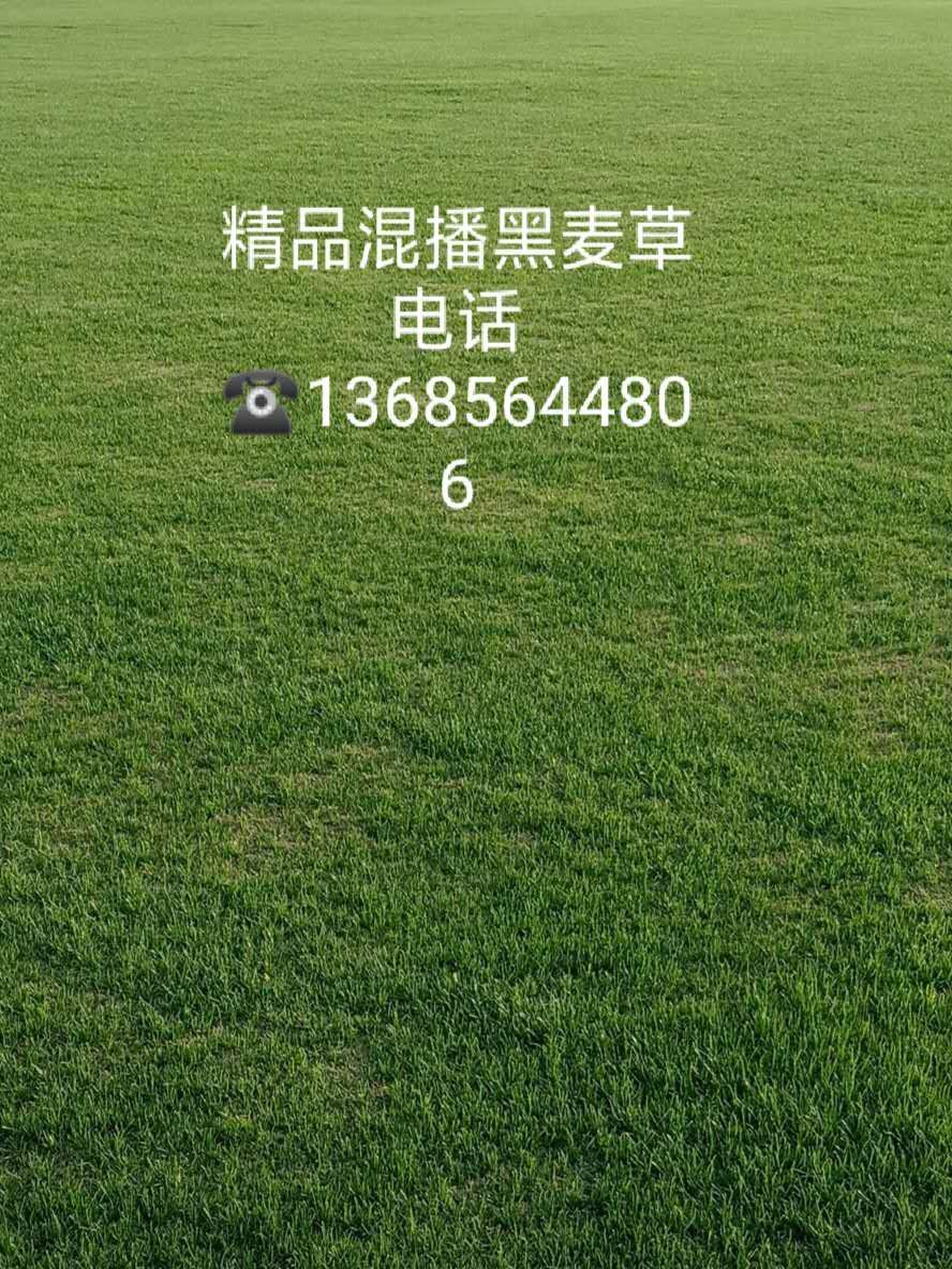 安徽混播黑麦草基地销售