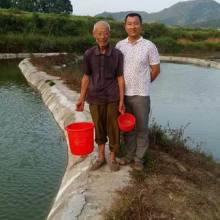 石斑鱼苗养殖场-江西石斑鱼苗批发价格-江西长运特种鱼苗养殖场/厂家