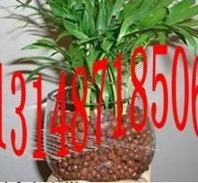 广东揭阳陶粒批发13148718