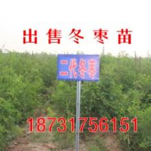 安徽出售二代冬枣苗