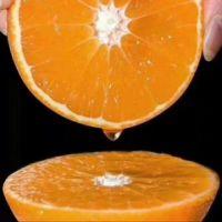 果冻橙苗种植基地、供应、批发、价格【四川瑞农天蓝林业有限公司】