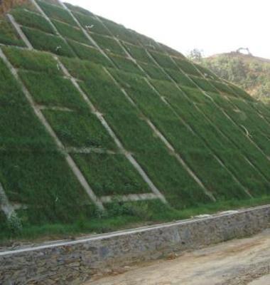 护坡草坪图片/护坡草坪样板图 (1)
